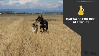 Omega 3 for dog allergies