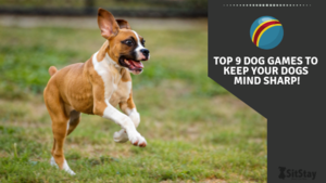Top 9 Dog Games To Keep Your Dogs Mind Sharp!