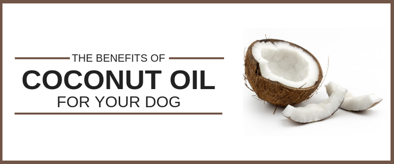 The Benefits of Coconut Oil for Your Dog