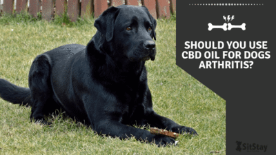 Should you use CBD Oil for Dog's Arthritis?