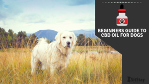 BEGINNERS GUIDE TO CBD OIL FOR DOGS