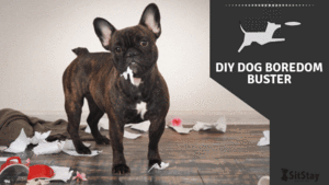 DIY Dog Boredom Buster