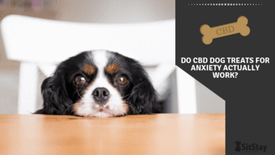 Do CBD dog treats for anxiety actually work?