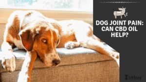 Dog Joint Pain: Can CBD Oil Help?