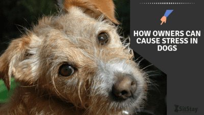 How Owners Can Cause Stress in Dogs