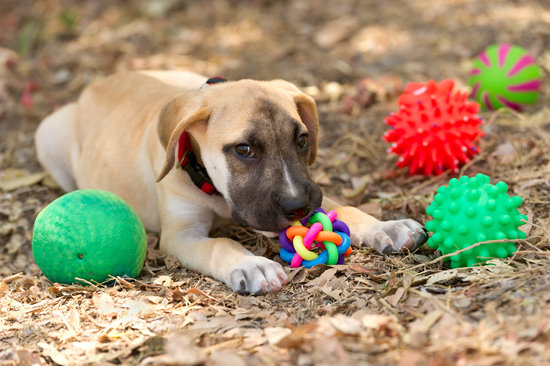 Tan puppy with toys all around them under a tree
