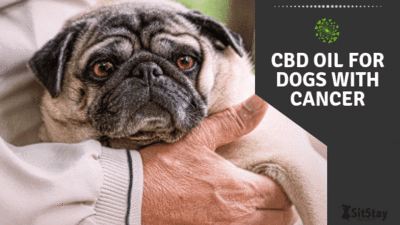 CBD Oil For Dogs With Cancer Blog Post