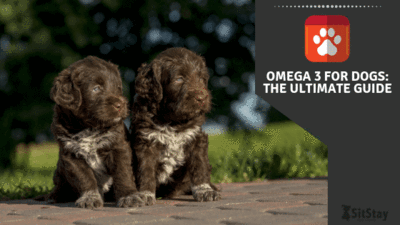 Omega 3 for dogs guide