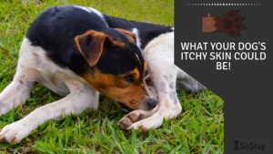 What Your Dog's Itchy Skin Could Be!