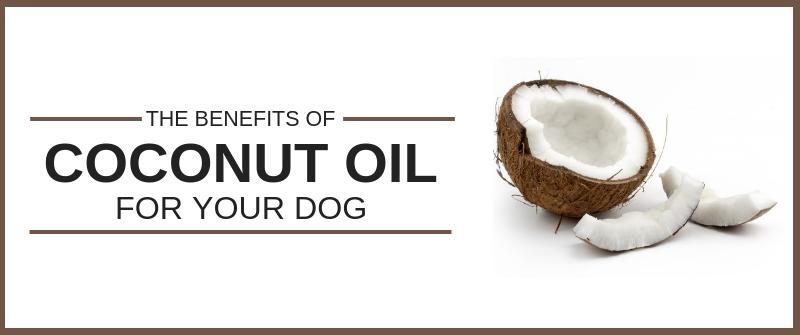 https://sitstay.com/blogs/good-dog-blog/coconut-oil-for-dogs