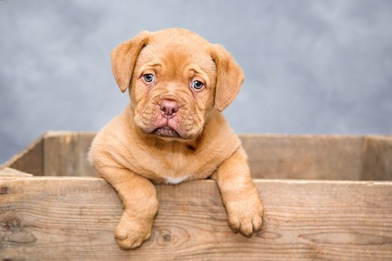 Best Boy Dog Names for this cute puppy