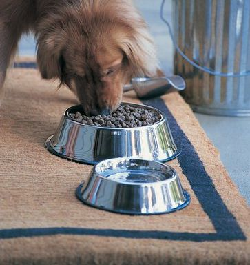 Intermittent fasting for dogs