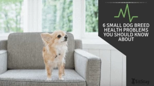 6 Small Dog Breed Health Problems You Should Know About