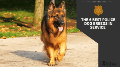 THE 6 BEST POLICE DOG BREEDS IN SERVICE