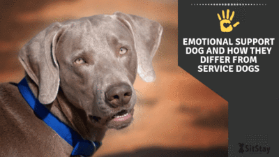 Emotional support dogs and how they differ from service dogs