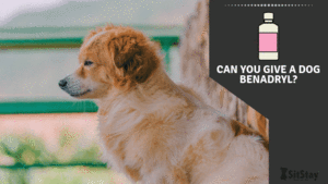 CAN YOU GIVE A DOG BENADRYL?