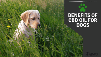 benefits of CBD oil for dogs article