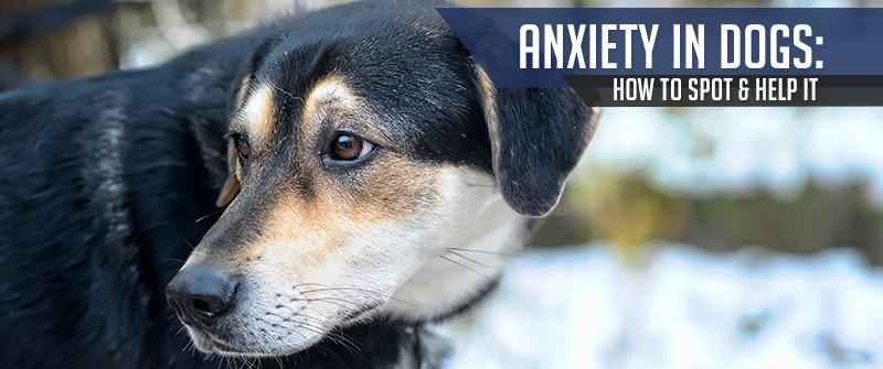Anxiety in Dogs: How to Spot and Help it