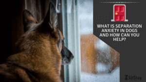 What is Separation Anxiety in Dogs and How Can You Help?