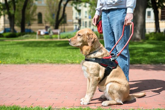 what are service dogs