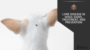 Lyme Disease in Dogs: Signs, Treatment, and Prevention