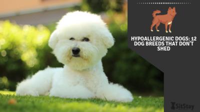 12 hypoallergenic dog breeds