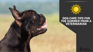 Dog Care Tips For Summer From A Veterinarian