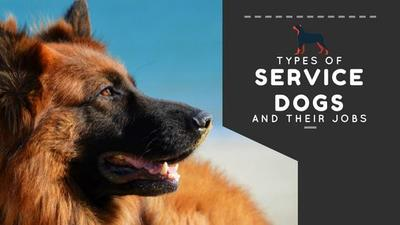 Types of Service Dogs and Their Jobs