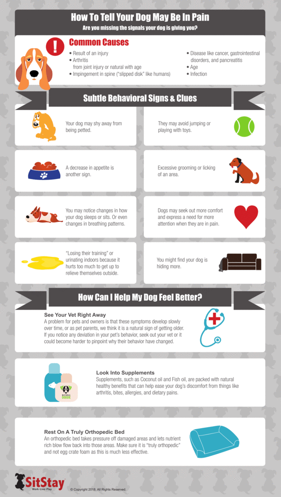 7 Warning signs your dog is in pain