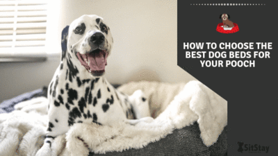 How to Choose The Best Dog Beds for Your Pooch