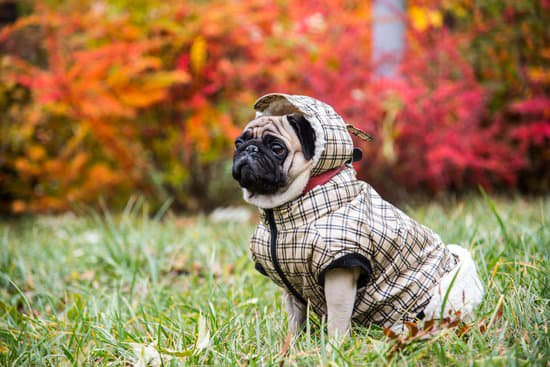 Pug in a plaid rain jacket sitting in the grass