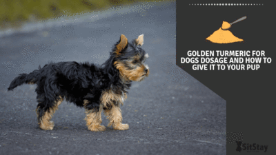 GOLDEN TURMERIC FOR DOGS DOSAGE AND HOW TO GIVE IT TO YOUR PUP