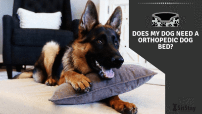 Does My Dog Need An Orthopedic Dog Bed?