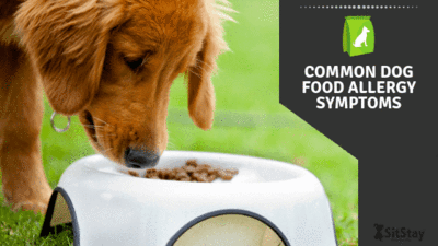 Common dog food allergy symptoms