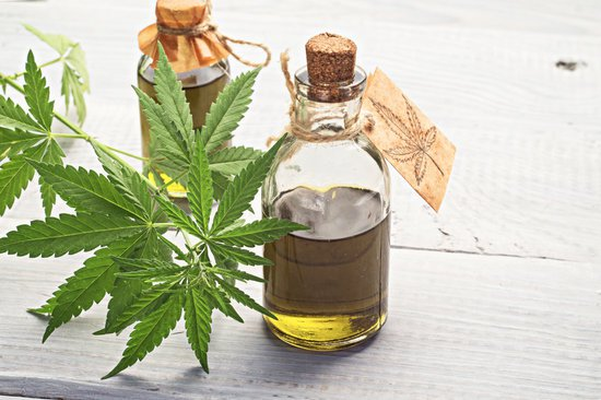 CBD oil for dogs in a glass bottle with hemp plant around