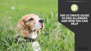 THE ULTIMATE GUIDE TO DOG ALLERGIES AND HOW YOU CAN HELP