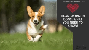 Heartworm in Dogs: What You Need to Know!
