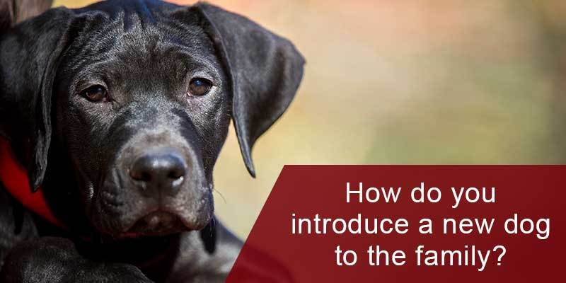 How Do You Introduce a New Dog to the Family?