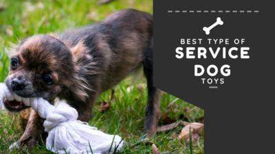 best service dog toys