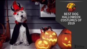Best Dog Halloween Costumes of 2019