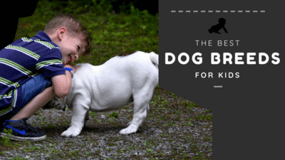 The Best Dog Breeds for Kids