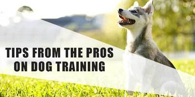 Tips from the Pros on Dog Training