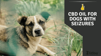 CBD Oil For Dogs With Seizures blog post