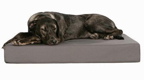 Gifts for dogs, Best Dog Gifts