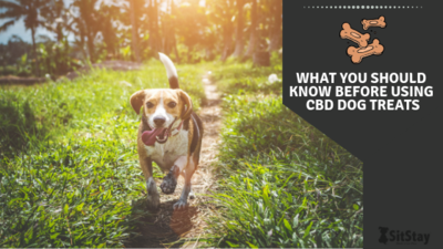 What you should know before using CBD dog treats