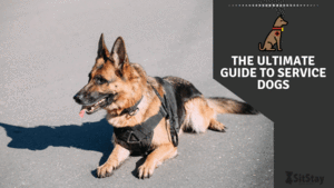 The Ultimate Guide to Service Dogs