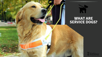 What are service dogs?