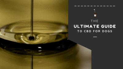 WHAT IS CBD FOR DOGS? THE ULTIMATE GUIDE TO HEMP AND CBD OIL FOR DOGS