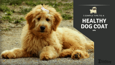 3 Simple Tips to a Healthy Dog Coat