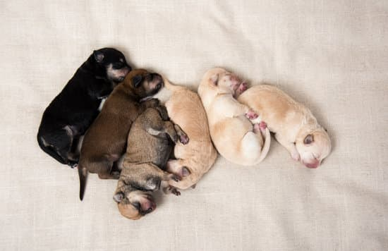 Litter of puppies sleeping together on a bed